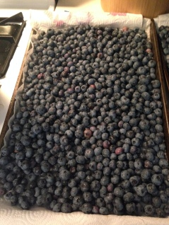 Cleaned and dried blueberries